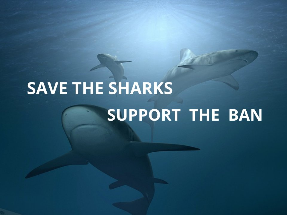 Save the sharks MALDIVES support
