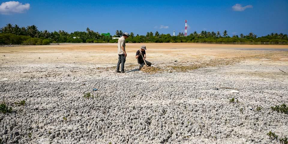 savemaldives Kulhudhuffushi mangrove Conservation